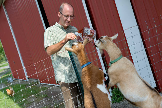 <p>Mike Sauter gives some treats to the goats at Bethlehem Retreat House at the Abbey of the Genesee in Piffard Aug. 4.  /p>