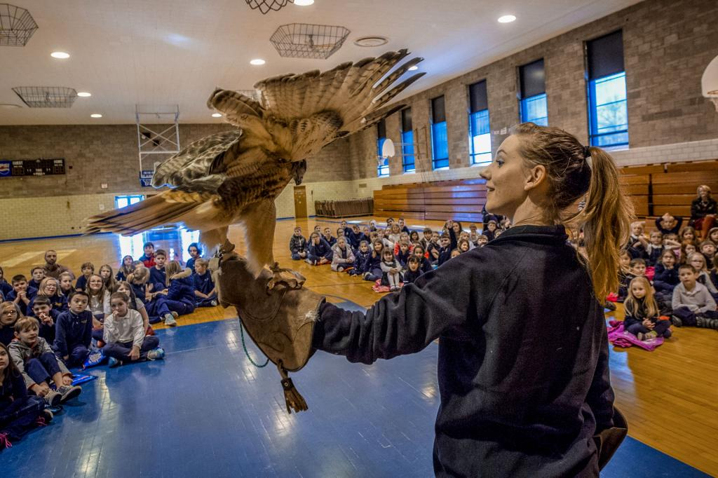 """Bree Riesbeck of Tanglewood Nature Center holds """"Hank"""" the red-tailed hawk as he show off his three-foot wingspan to students from Holy Family Catholic School in Elmira Jan. 30."""