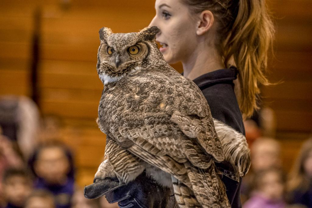 """Bree Riesbeck of Tanglewood Nature Center show off """"Sophie"""" the great horned owl to the students at Elmira's Holy Family Catholic School Jan. 30."""
