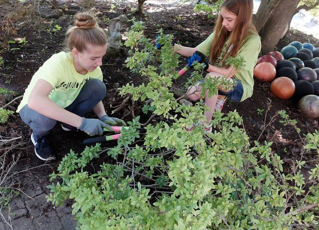 <p>Thirteen-year-olds Rose Nicoletti and Sage Lambie, parishioners of St. Benedict Parish in Canandaigua and East Bloomfield, trim shrubs at a home in Victor Aug. 2 as part of the parish's annual Summer Service Camp.  </p>